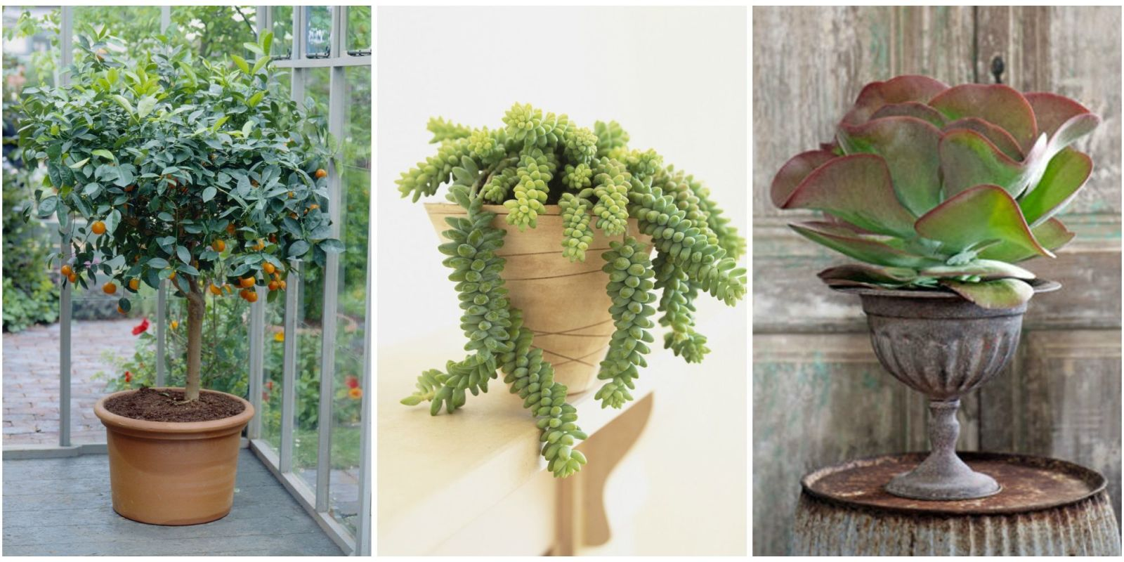 15 best indoor plants cool indoor gardening ideas for Indoor greenery ideas