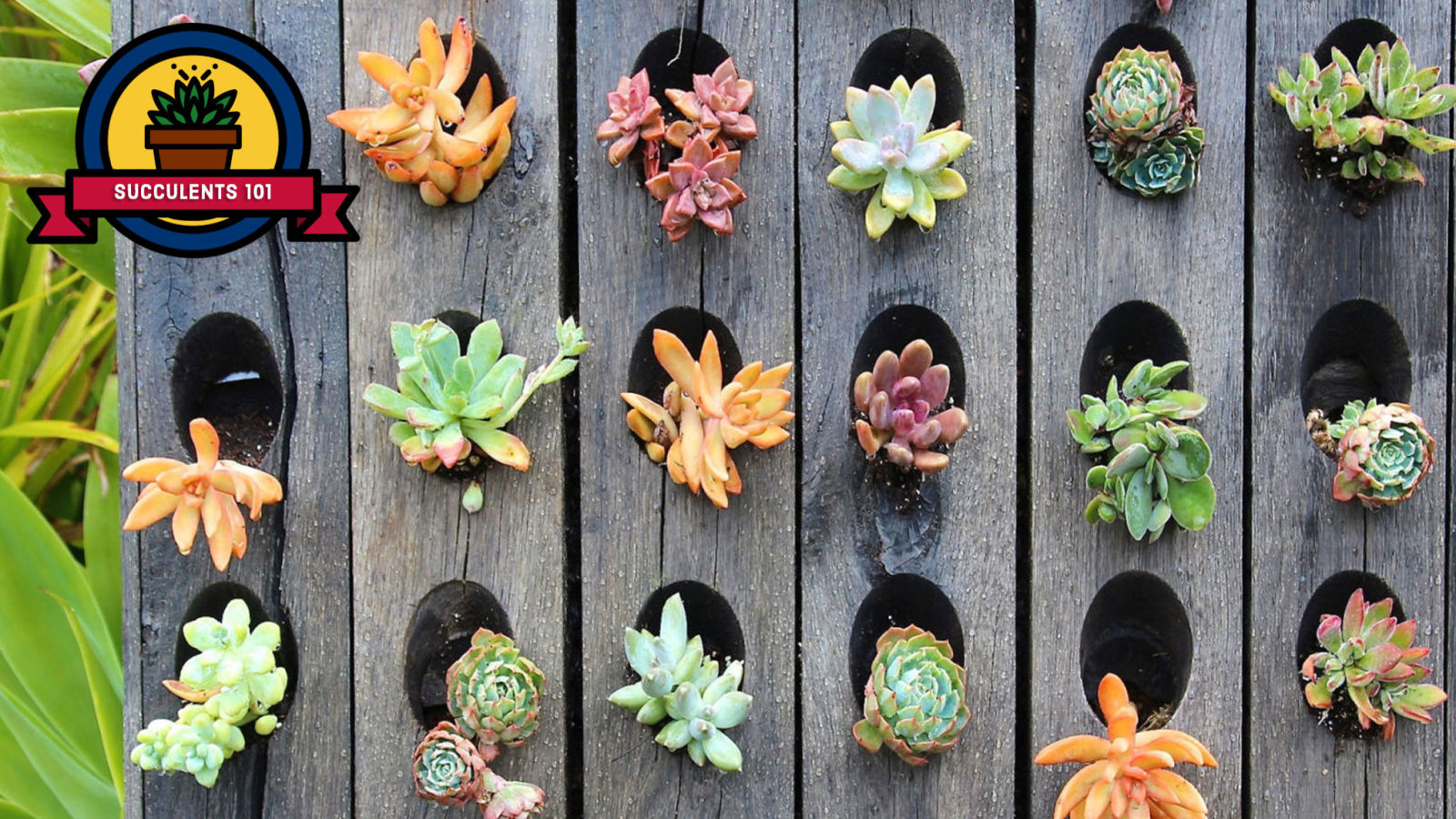 how to take care of succulents growing and planting succulents tips