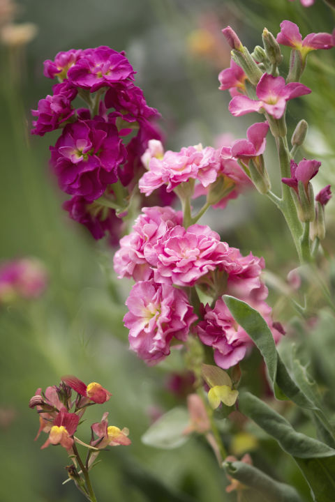 10 most fragrant outdoor flowers best smelling plants for Fiori bianchi profumati