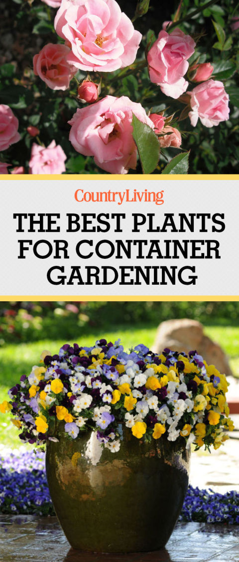 Container Gardening Ideas find this pin and more on container gardening ideas 1 Pin These Ideas