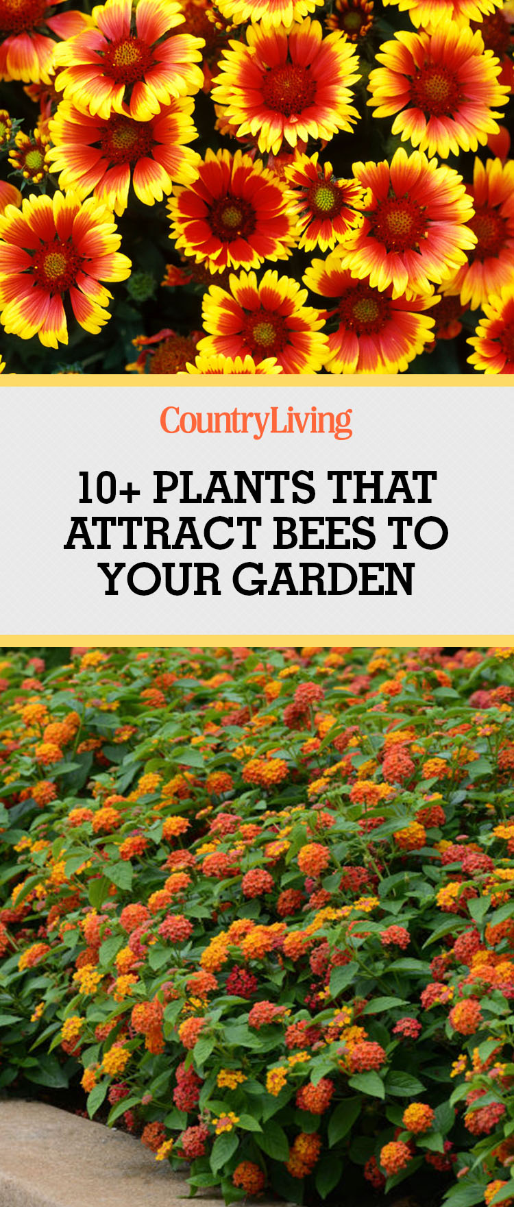 Plants That Attract Bees Pollinator Garden