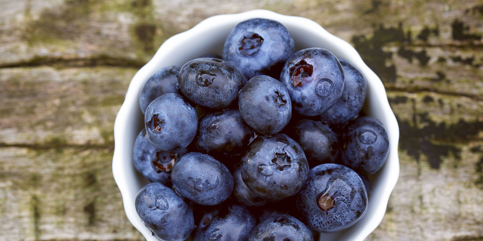 Can Dogs Eat Blueberries Are Blueberries Good Or Bad