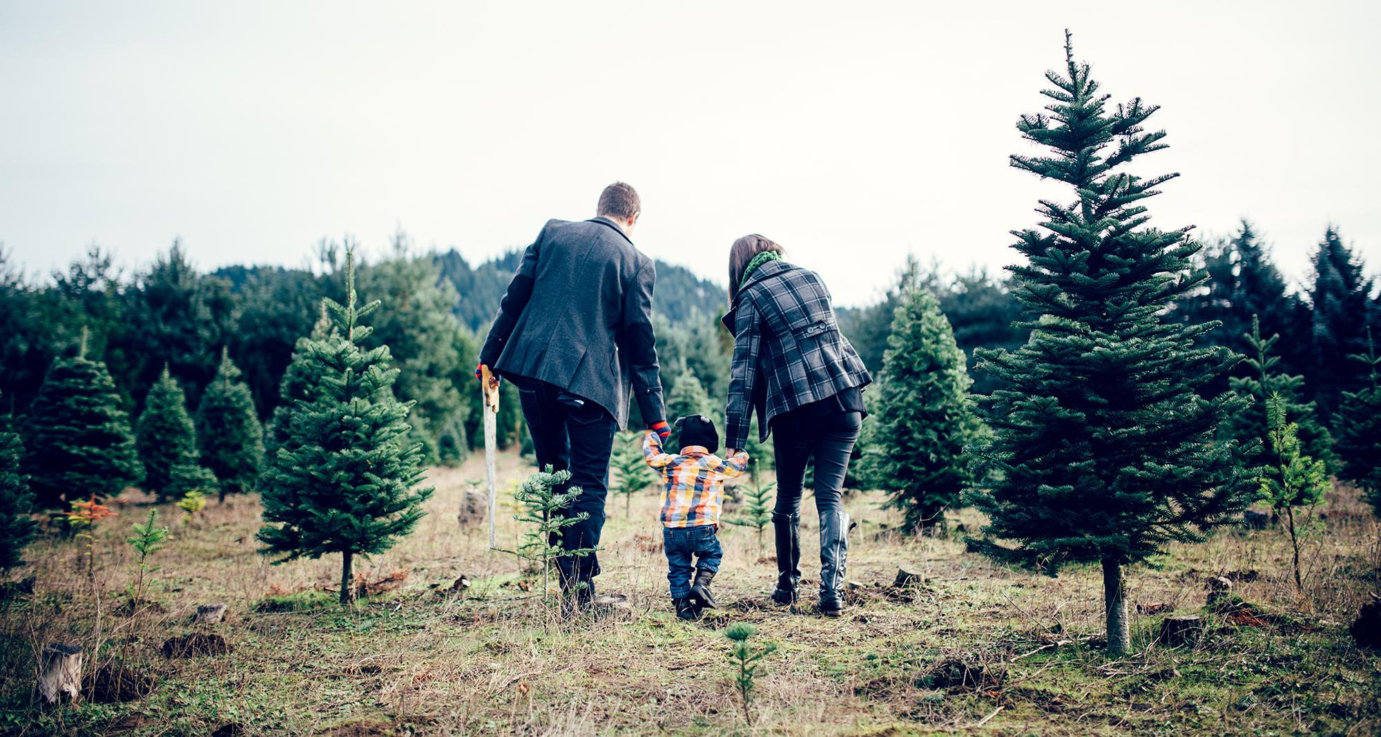 10 Best Christmas Tree Farms