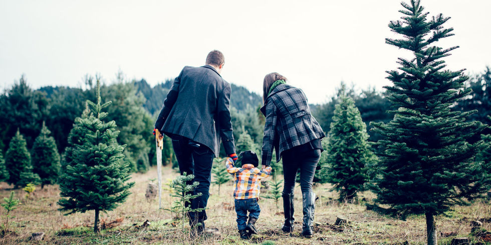 road tripping to a christmas tree farm is one of those unforgettable family memories - Christmas Tree Farms