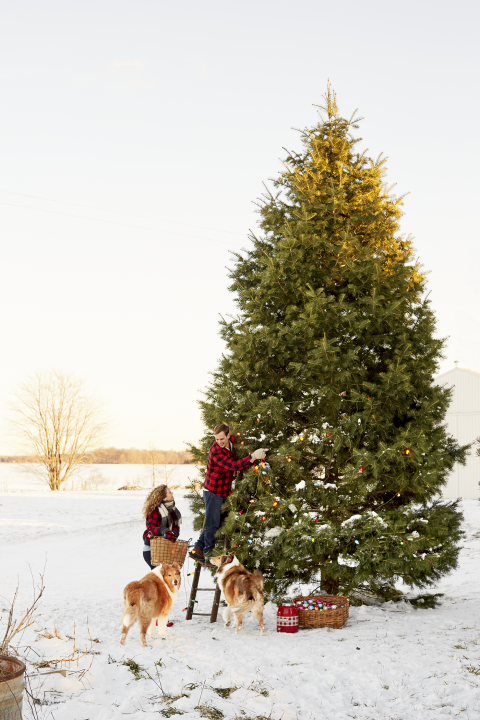 farmhouse outdoor christmas decorations - Outside Christmas Tree