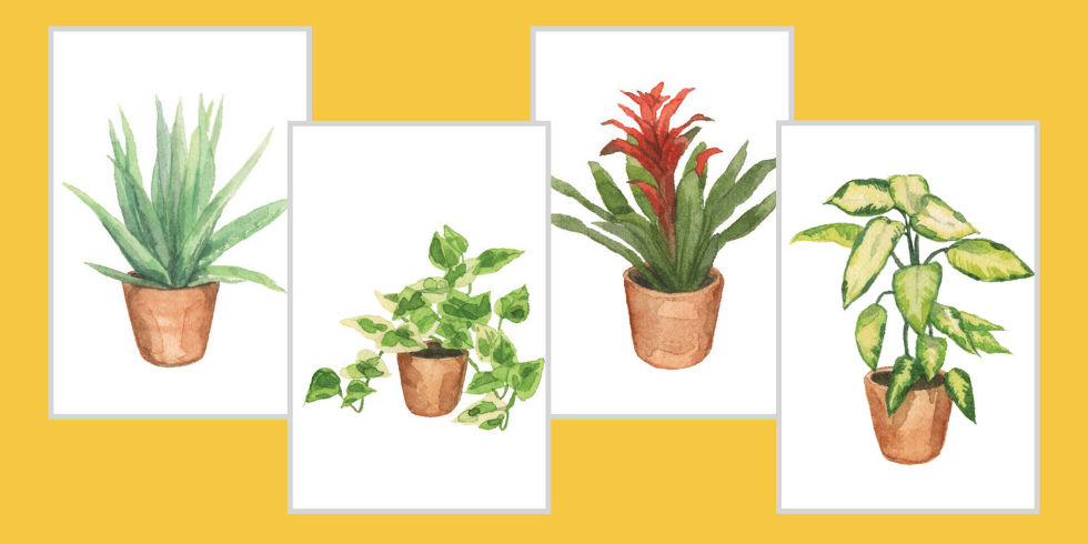 black thumbs rejoice here are some of the least killable options for your sill theyu0027re also perfect for launching a collection of shower plants