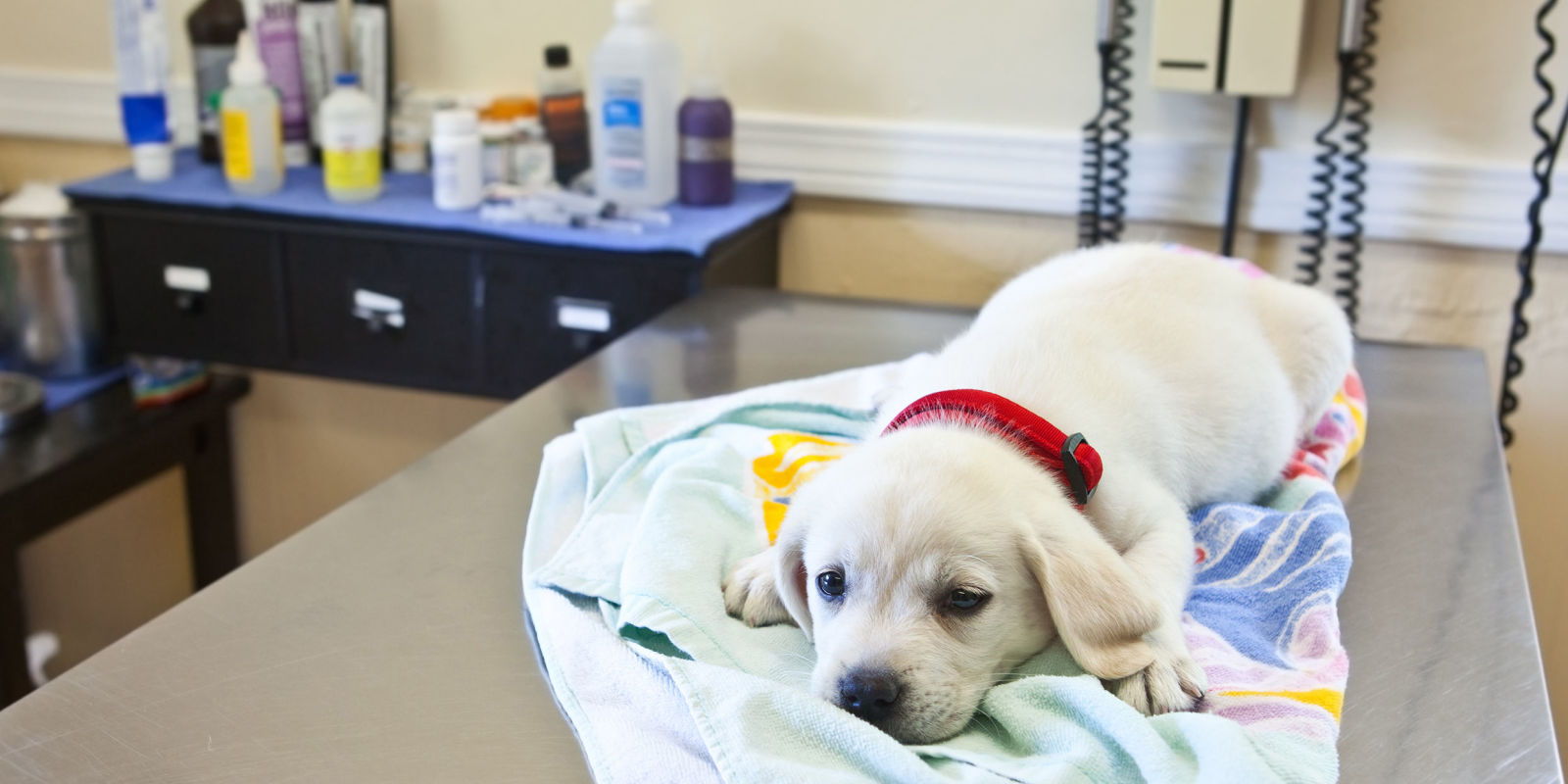 The Dog Flu Is Spreading Across the Country for the First Time In Years