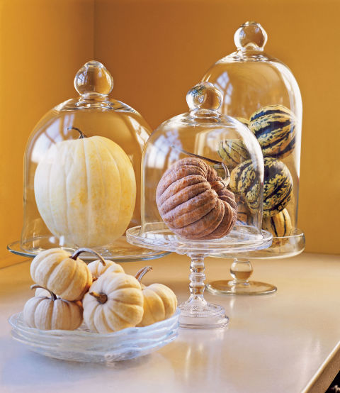 Autumn Harvest: Pumpkin Display Photo Gallery