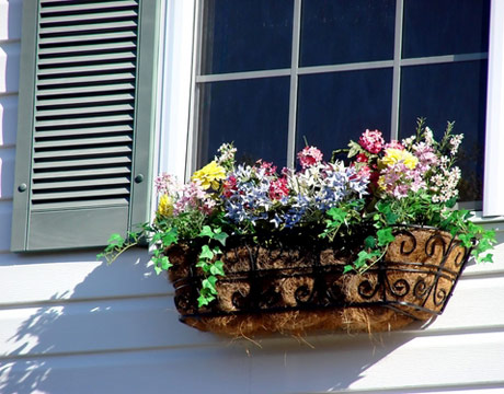 Window Boxes For Beginners