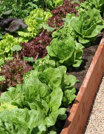 growing vegetables in full sun