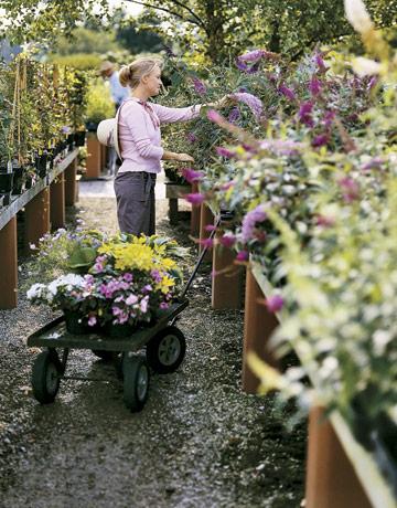 Shopping the Garden Nursery Garden Tips and Strategies