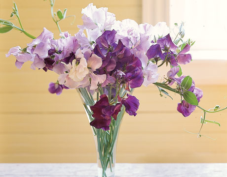 Sweet Pea Flowers Weddings