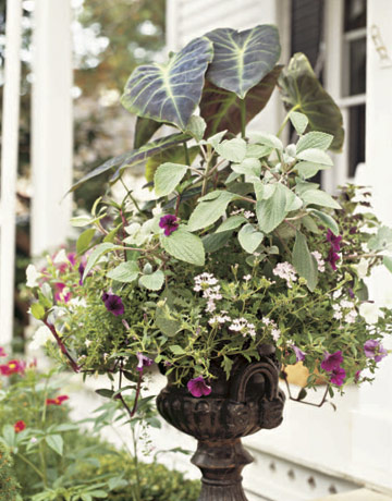 Container Garden Design Ideas find this pin and more on container gardening Flower Filled Urn