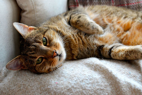 How To Cover Up Pet Smells House Cleaning Tricks For Pet