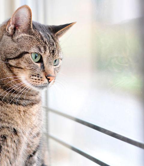 Cat diagnosis help
