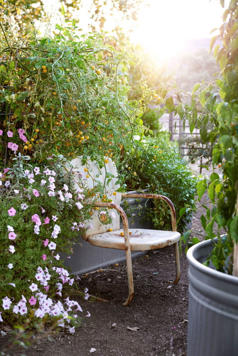 Portulaca, variegated sage, cherry tomatoes, Padron peppers, parsley, and more thrive in galvanized troughs in the backyard of this California home.