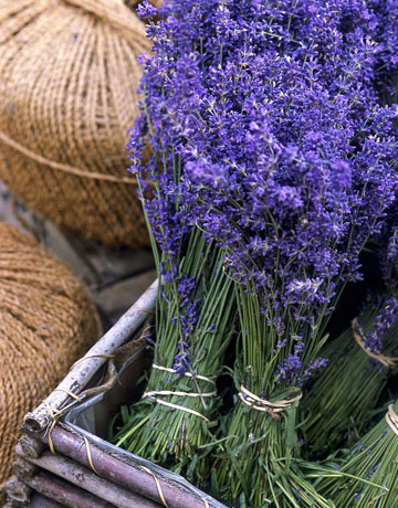 FOOD: Mix a late summer drink with lavender flowers, or sprinkle the dried blooms onto favorite desserts. BEAUTY: Lavender soothes skin. Choose natural products made from pure essential oils. SACHET: Make sachets of dried lavender to scent drawers and closets and to repel insects. FLORAL ARRANGING: Pots of lavender make beautiful centerpieces for an outdoor party. Dried bunches look fresh all year.