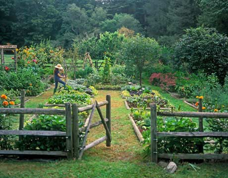 Kitchen garden organic herb kitchen gardening for Small kitchen garden plans