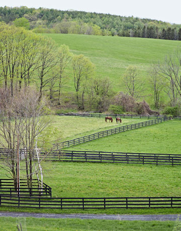 """Maintaining their 15 acres is a constant challenge, Paige admits. """"I keep threatening to get sheep so we won't have to mow so much."""""""