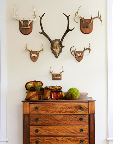 deer antlers on wall - Home Decorated