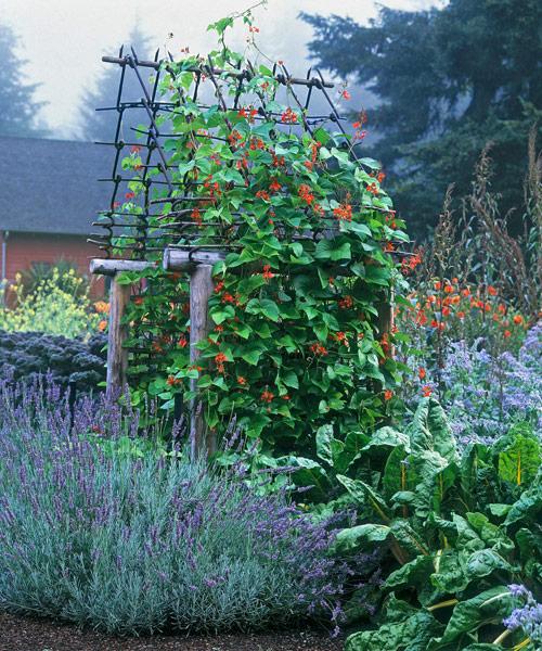 Beautiful vegetable ornamental herbs for Ornamental vegetable garden design