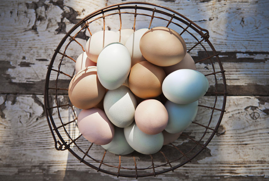 """The American Poultry Association recognizes 62 breeds. Heather opted for medium-size hens known to lay three to five eggs a week, though she admits that egg color influenced her selections, too: """"I love the mix of pretty hues!"""" Mypetchicken.com makes it easy to choose birds based on hardiness, size, and, yes, egg color—and sells day-old chicks for $3 to $8 each."""