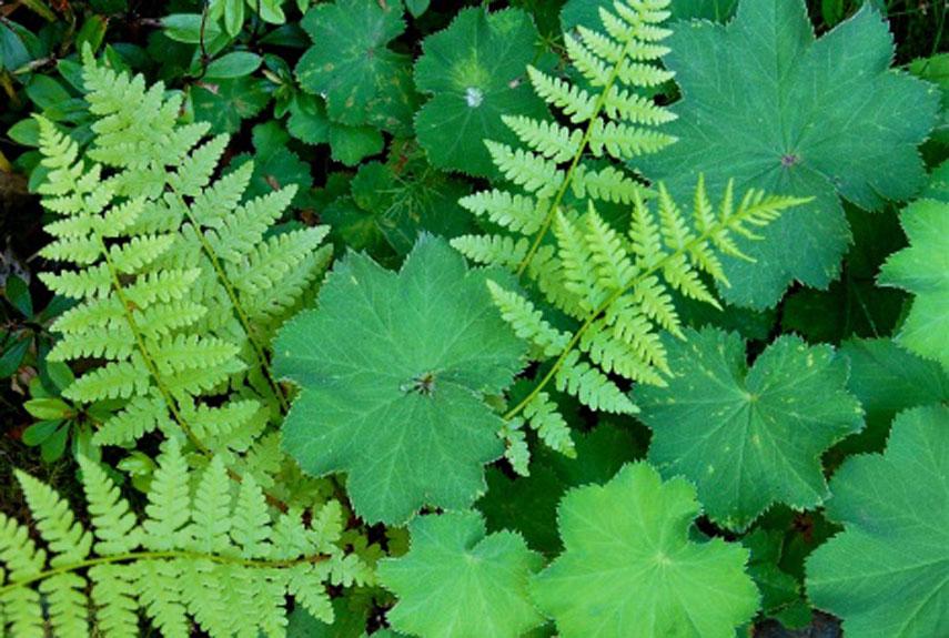 best perennial flowers  ideas for easy perennial flowering plants, Natural flower