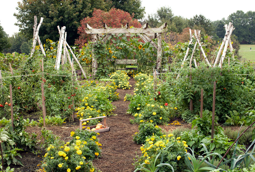 Small vegetable garden design ideas how to plan a garden for Kitchen garden design