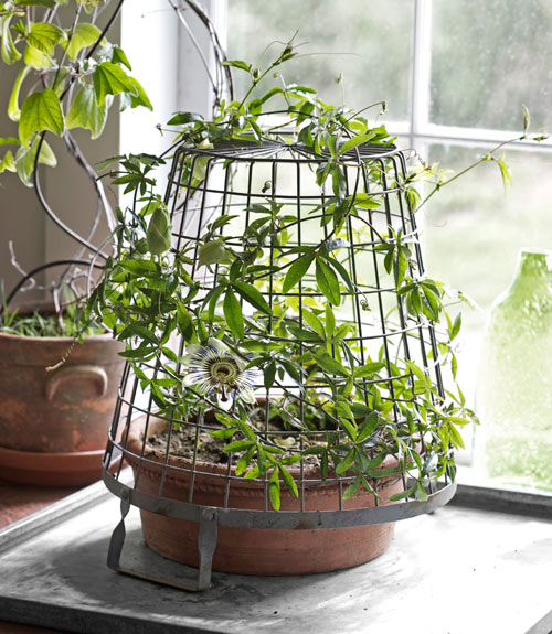 Indoor plants indoor gardening ideas from tovah martin Weird plants to grow indoors