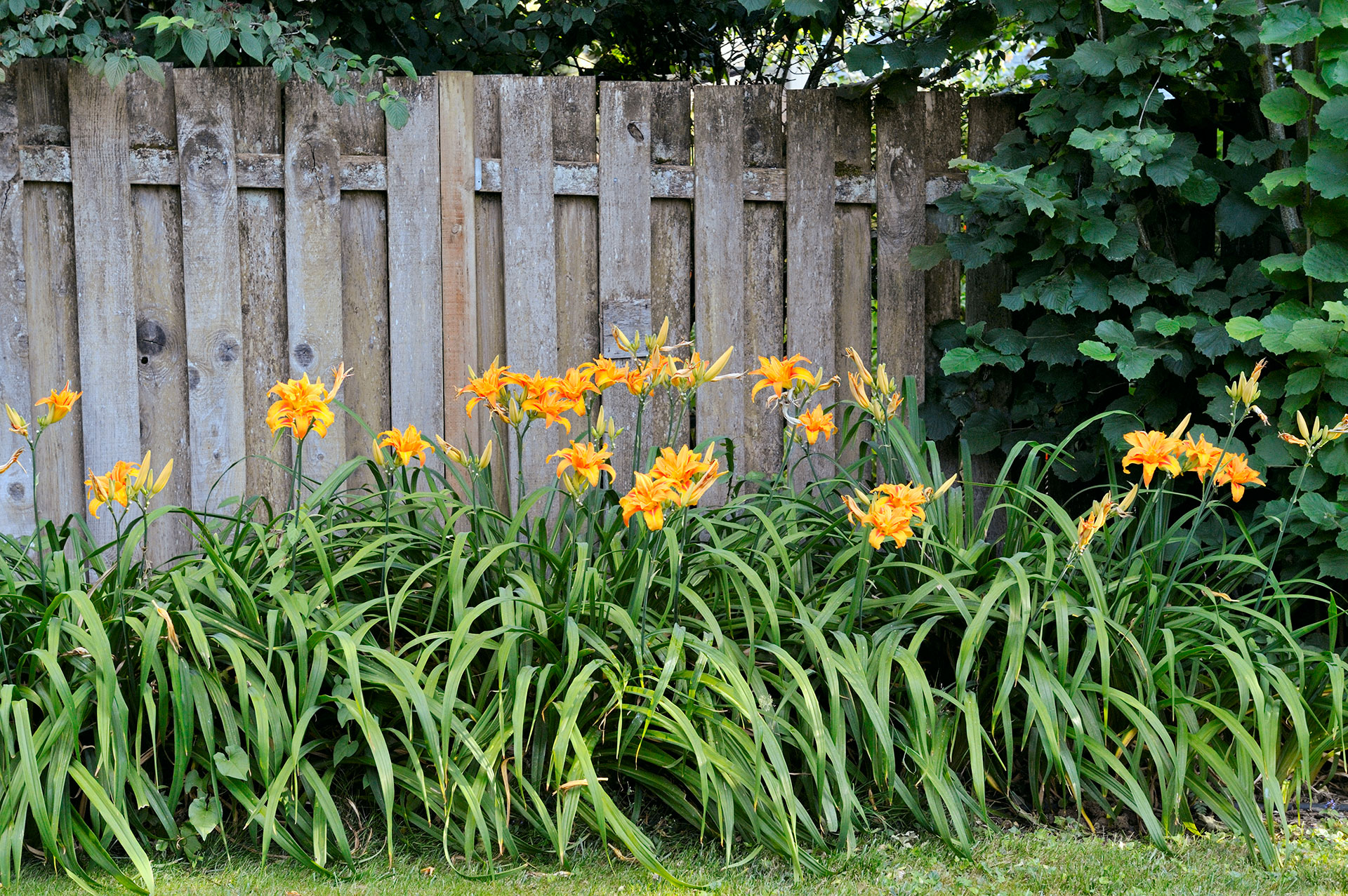 Year round plants for flower beds - Year Round Plants For Flower Beds 26
