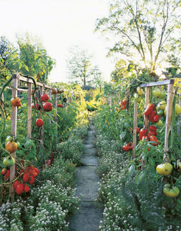 steeped in rose perfume and herb scents as well as meticulously combined shades of color and discriminatingly selected tomatoes the garden favors all of - Country Vegetable Garden Ideas