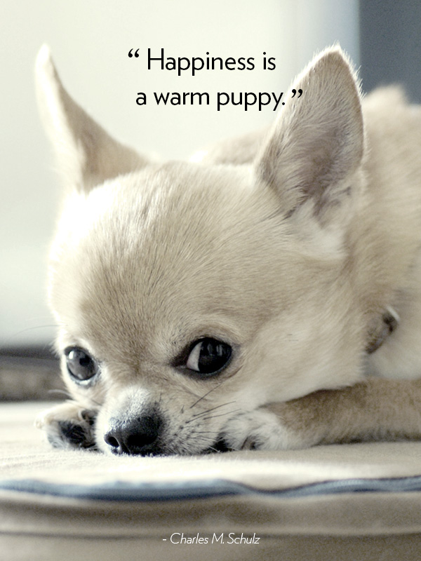 Quotes About Dogs Dog Quotes