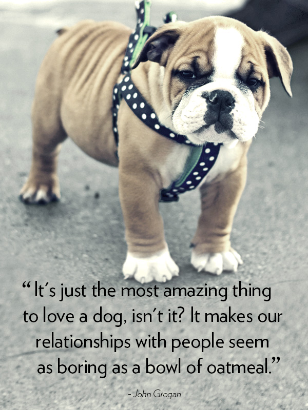 Quotes About Backyard Breeders : Dogs With Sayings quotes about dogs dog quotes