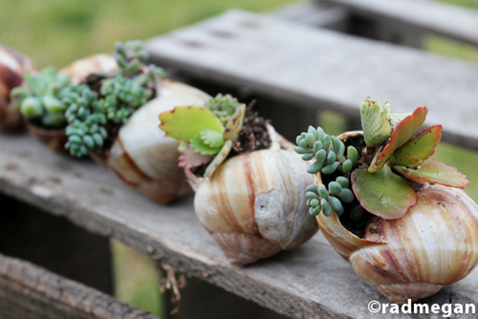 Plant an adorable miniature garden using shells collected during your last beach vacation. Get the tutorial at Radmegan.