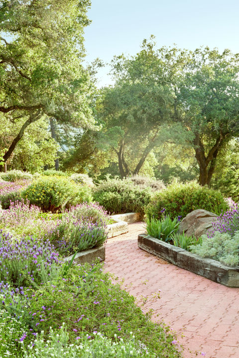 The lush garden of this Napa Valley country cottage features lavender, rosemary, irises, and fruit trees.