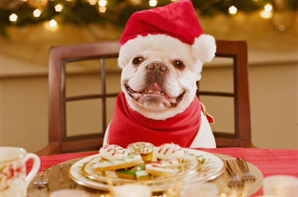 Image result for christmas puppy
