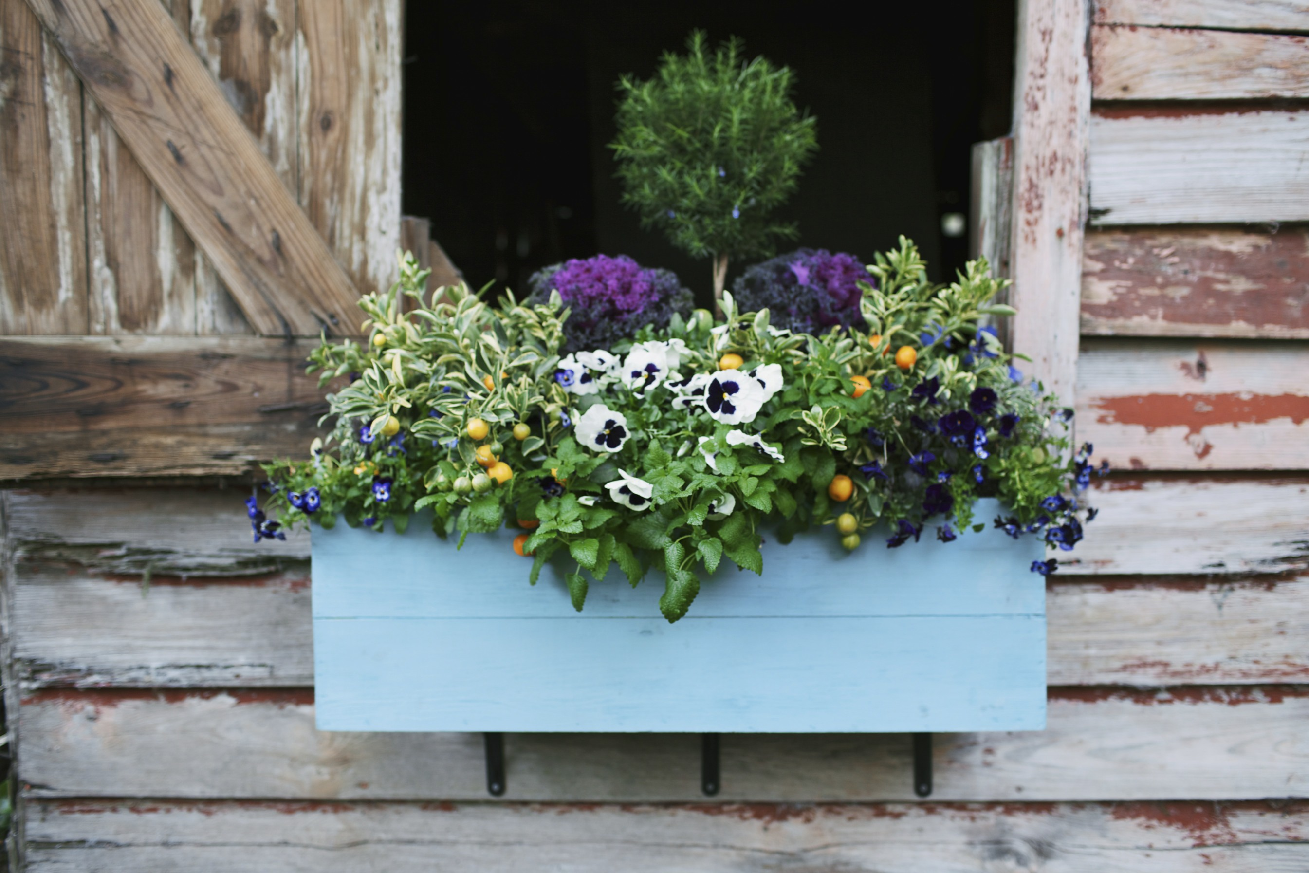 flower box ideas 18 gardening ideas for your window boxes window box 29416
