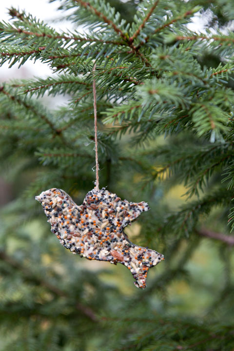 Attract blue jays and goldfinches in winter with this frozen birdseed ornament, adapted from Ernst Kirchsteiger's Swedish Christmas Traditions. Get the tutorial here.