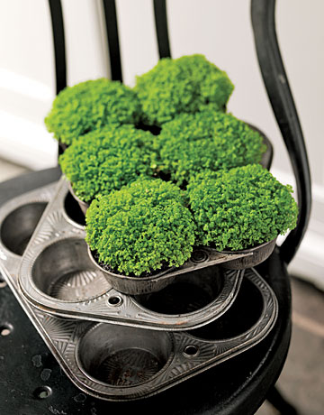 Serve up clusters of baby's tears or moss in a vintage muffin tin to cheer a kitchen, dining table, or windowsill. Place plants directly from nursery flats (you can later transplant them to your garden). Mist as needed.