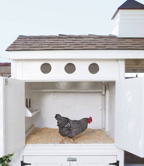 "Connected to the nesting boxes and the screened pen, this area serves as the hens' main sleeping quarters. ""The minute the sun starts setting, the girls line up like little soldiers and march themselves to bed,"" Heather says. Come sunrise, the birds know it's time to get up, thanks to screened portholes that also provide ventilation."
