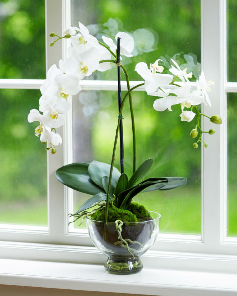 """""""Believe it or not, these orchids don't mind being neglected a little,"""" says Vass, making them perfect for some extra ambiance in the entryway without any extra maintenance. The fragrant beauties can bloom for up to three months at a time.<br /><br /><br />"""